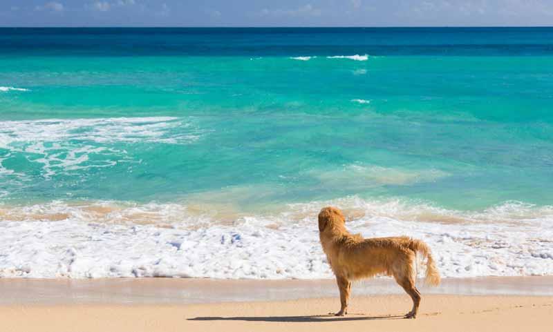 Reisetipps für einen Urlaub mit dem Hund in Kroatien